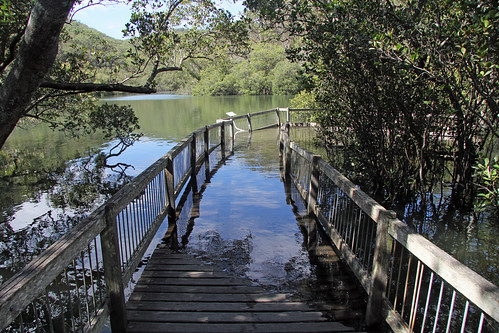 High Tiide On the Mangrove Boardwalk