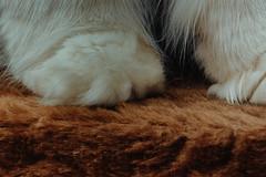 natural or fabric (koolandgang) Tags: clothtextile misket misscat macromondays paw synthetic weaving persian cat kedi