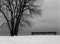 Benchwarmers wanted (pabs35) Tags: film believeinfilm mediumformat 120 ilford fp4 fp4plus ilfordfp4plus mamiya m645 1000s mamiyam6451000s lakemichigan chicago bench snow winter tree blackandwhite bw