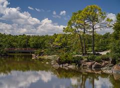 Across the lake (Tim Ravenscroft) Tags: lake tree landscape garden morikami florida hasselblad x1d