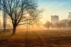 Morning in the city (Unicorn.mod) Tags: 2017 colors landsape cityscape outdoor morning sunlight sunset sun spring lipetsk light tree canoneos6d samyang35mmf14asumc samyangmf35mmf14edasumcae manual manuallens april