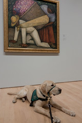 Gilroy and The Flower Carrier (niallkennedy) Tags: gilroy sfmoma puppy