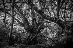 In the Woods (DJNanartist) Tags: nikond750 nikon28300mm lakedistrict anartist derwentwater skiddaw sunny