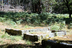 Abandoned cemetery (Wintrmute) Tags: victoria australia wombat stateforest cemetery abandoned