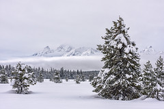 Baby It's Cold Outside (Amy Hudechek Photography) Tags: winter forest snow cold fog january gtnp grand teton national park trees amy hudechek nature landscape peaceful tranquil quiet