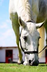 DSC_4064-Edit (saladino85) Tags: animalspeople horses