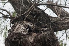 樹木 (Bryan Shan@) Tags: sony a55 pentax supermulticoatedtakumar11885 supermulticoated takumar 85mm f18 plant 植物 樹木