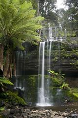 DSC05257 (nigel0577) Tags: sony alpha a99ii tasmania 1635mm ziess russel falls forest green waterfall