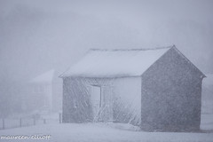 Barn In White (maureen.elliott) Tags: barn monochrome building structure snow snowing brucepeninsula storm architecture