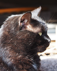 Kocio Black-Cat (arjuna_zbycho) Tags: blackcat tuxedo tuxedocat kater hauskatze cat animal cute animals pets gato kitten feline kitty kittens pet tier haustier katzen gattini gatto chat cats kocio
