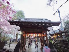 IMGP5699 (digitalbear) Tags: pentax q7 08widezoom 17528mm f374 nakano doori sakura cherry blossom blooming full bloom tokyo japan araiyakushi arai yakushi baishoin