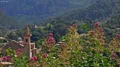 Valldemossa (dreptacz) Tags: majorka lustrzanka hiszpania sony slt55 sony55v widok krajobraz góry natura kwiaty rośliny zieleń