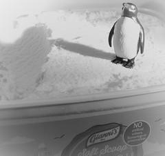 Soft scoop Antarctic. (cymrost) Tags: icecream penguin toy antarctic blackwhite humour