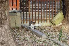 Today's Cat@2017-03-25 (masatsu) Tags: cat thebiggestgroupwithonlycats catspotting pentax mx1