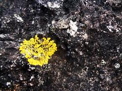 Musgos  /  Moss (AndreSF_Fotografia) Tags: musgo moss pedra stone natureza nature sony outdoor