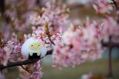 Sumikko Onigiri + 河津桜 (Nazra Zahri) Tags: すみっコぐらし すみっコべんとう すみっコ弁当 onigiri riceball おにぎり stuffedtoy sunset cherryblossoms sakura pink kawazuzakura okayama japan konanairport