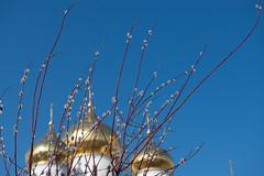 Весеннее, православное (akk_rus) Tags: 2470 28 nikkor nikkor247028 nikon d800 nikond800 moscowregion подмосковье dmitrov дмитров