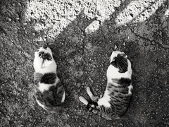 We're definitely not alone! (kallchar) Tags: cats shadows animals nature company street streetphotography flickr ears olympus olympusomdem10 art artistic blackandwhite monochrome nocolor