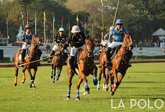 LaPolo (La-Polo) Tags: match polo war ongame game india horse ground sports