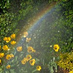 At the End of the Rainbow thumbnail