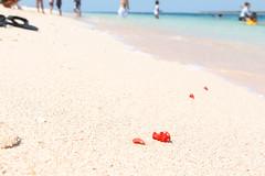 Pink Sand Beach (SIPAT: View from the Edge) Tags: pinksandbeach pinksand pinkbeach zamboanga zamboangacity greatstacruzisland philippinebeaches zamboangabeach