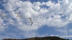 Στιγμες.....Ελλαδα  DSC05019 (omirou56) Tags: 169ratio sonydscwx500 clouds sky birds seagull mountain greece συννεφα ουρανοσ ελλαδα βουνο γλαροι πουλια outdoor