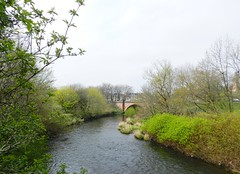 River Kelvin, Kelvingrove Park, Glasgow, April 2017 (allanmaciver) Tags: river kelvin glasgow water grey trees shrubs green cloudy hazy bridge city central walk enjoy explore allanmaciver