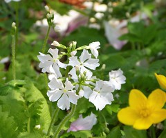 2017 Germany // Unser Garten - Our garden // im April // (maerzbecher-Deutschland zu Fuss) Tags: 2017 garten natur deutschland germany maerzbecher garden unsergarten april