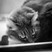 Darkness cat