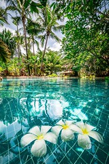 My kind of place for the weekend ahead❤️❤️❤️ Tropical Climate Beauty In Nature Pool Swimingpool Frangipani Resorts Luxury Flower Water No People Copy Space Nature Tranquility Vacations Swimming Pool Tranquil Scene Tourist Resort Floating (Nick Pandev) Tags: tropicalclimate beautyinnature pool swimingpool frangipani resorts luxury flower water nopeople copyspace nature tranquility vacations swimmingpool tranquilscene touristresort floatingonwater palmtree relaxation traveldestinations scenics outdoors holiday followmeoninstagram