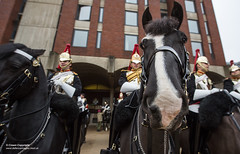 QUEENS CAVALRY READY FOR SUMMER OF CEREMONIAL (Defence Images) Tags: ceremonial occasion horse animal soldiers nonidentifiable personnel helmet headwear plumedhelmet jackboots breastplate silvercuirasses army regiments thehouseholdcavalry thehouseholdcavalrymountedregiment hcmrd location london equipment clothing bugle hydeparkbarracks defence free defense uk british military londondistrict unitedkingdom gbr