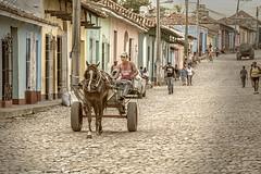 Homeward Bound (Jodi Newell) Tags: canon cobblestone cuba horse jodinewell jodisjourneysphotosgmailcom street trinidad