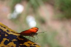 Borboleta bairro São João JM - Wir Caetano - 26 04 2017 (35) (dabliê texto imagem - Comunicação Visual e Jorn) Tags: borboleta inseto amarelo escada ferrugem