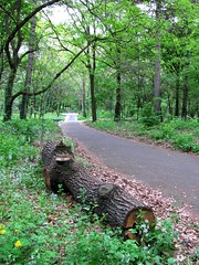 follow me (s_lverspring) Tags: forest woods path winding parallel trunk green foliage vanish fallen distance distant disappear flowers crossroad tree grass shade peaceful lonely quiet spring direction
