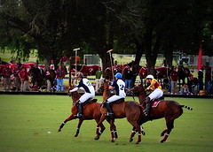 117th Hurlingham Club Open Championship, Argentina / 117° Abierto de Hurlingham YPF (Σταύρος) Tags: travel vacation portrait horse holiday man argentina argentine leather cheval buenosaires nikon boots pony portraiture ba 70300mm polo rtw pferd vacanze tack hest porteños roundtheworld paard triplecrown 馬 polopony globetrotter polomatch лошадь poloclub argentinien 阿根廷 hurlingham equidae onhorseback polofield zonea hurlinghamclub leatherboots worldtraveler άλογο ariannin repúblicaargentina laaguada アルゼンチン chukkas 皮革 argentinidad pologame poloteam ladolfina الأرجنتين 아르헨티나 d700 аргентина zonaa nikond700 chukkers abiertodehurlingham αργεντινή triplecorona 117thhurlinghamopen hurlinghamopen аргенти́на chukers tradiciondelpoloargentino