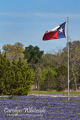 Texas Flag over Bluebonnets