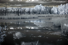 IMG_2274 (Dan Correia) Tags: amherst swamp clouds reflection infrared canonef50mmf14usm 510fav topv111 topv333 topv555 1025fav