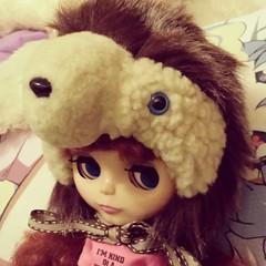 Hedgehog Hat!