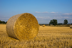 summertime (OR_U) Tags: uk blue sunset summer yellow rural landscape yorkshire ngc straw roll rolls oru 2013
