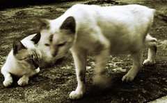 adik beradik miming dan miow (PieceOfMindArt) Tags: animal cat nikon coolpix s3000