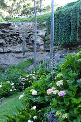 mountgambier sinkhole limestone ivy hydrangeas umpherston