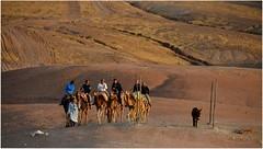 Dans le dsert Marrakchi, il y a un oasis qui s'appelle la Pause. On peut y passer quelques jours loin de la civilisation, sans lectricit, sans internet... (Barbara DALMAZZO-TEMPEL) Tags: sunset morocco maroc marrakech coucherdesoleil dromadaire lapause dsertmarrakchi