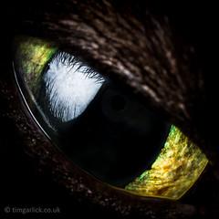 304/365/2013 - Happy Halloween! (TimGarlick) Tags: iris pet macro eye halloween monster cat spooky reflect 365 pupil project365