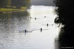 Torino (laura_gio67) Tags: torino nikon italia fiume po autunno parcodelvalentinotorino nikonclubit