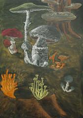 Board Draweings Grade 5 4-1-2003 8-17-27 AM 1-7.jpg (ArneKaiser) Tags: boarddrawings edited chalkdrawings chalk chalkboard 5thgrade botany mushrooms waldorf flickr