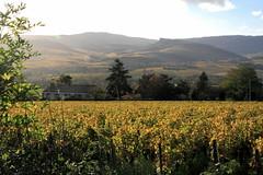 Vigne et Roche (Chemose) Tags: autumn rock automne landscape burgundy bourgogne vignoble vigne vinyard roche solutre solutré charnaylèsmâcon mâconnais