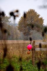 Birthday (Smoke It 000) Tags: autumn france nature automne nikon terre paysage arbre champ chne d5100