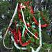Trees_of_Loop_360_2013_038