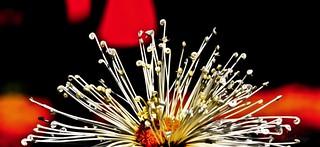 Chrysanthemums Show, Chandigarh !!!