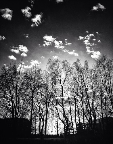 Sky behind trees